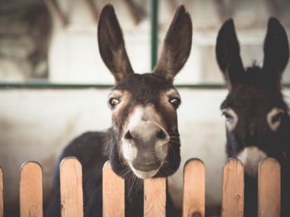 "Petting Zoo and ""Open Barn"" for small and big children at Hotel Schröckerhof ★★★★"